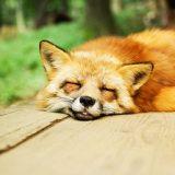 【金縛りの治し方】そのメカニズムと睡眠障害の解消法