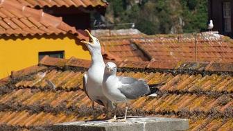 gulls-429728_640