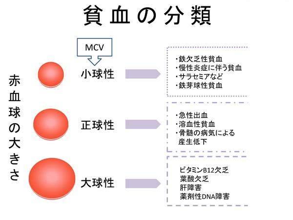 貧血の分類