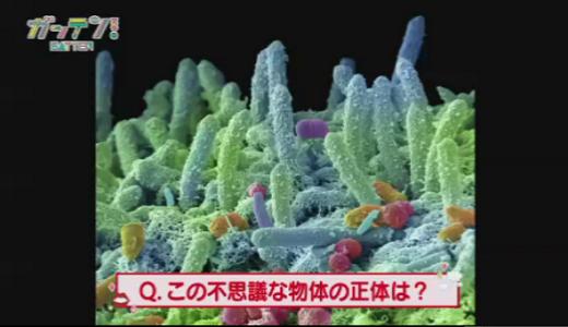 【口内フローラ】心筋梗塞や脳梗塞の原因!?口内の悪玉菌を抑える「緑茶うがい」とは