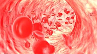 ハーブ 血管