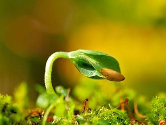 人生 種から発芽