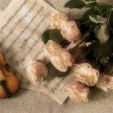 【クラシック音楽】心が傷ついて苦しいときに聞きたい「癒しの曲」おすすめ5選
