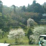吉野山 中千本公園行きのバスから