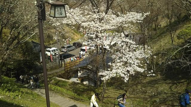 吉野山 中千本公園バス停から階段を登ったところ
