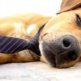 【眠気を覚ます】睡魔を一瞬で撃退する14の方法